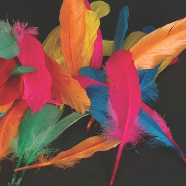 50 plumas de indio 6 colores Niefenver 0900208