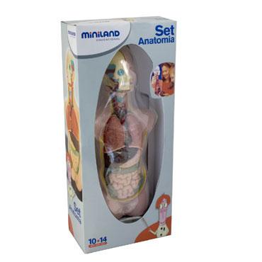 Set de anatomía Miniland 99020